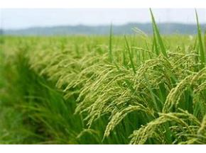 Agricultural Miticide Market to Witness Robust Expansion by 2025 - QY Research, Inc.