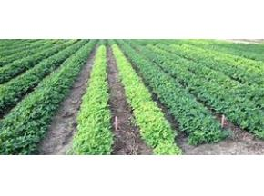 global, Agricultural Inoculants, market report, history and forecast, 2013-2025