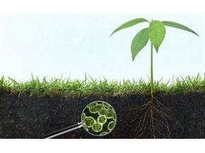 Global Agricultural Microbials Market to Witness a Pronounce Growth During 2025 - QY research