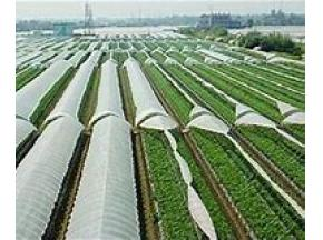 Global Agriculture Film Market to Witness a Pronounce Growth During 2025 - QY research