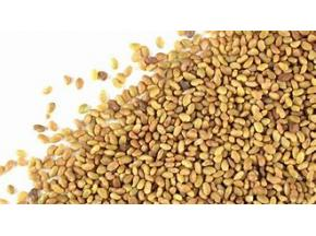 Global Alfalfa Seeds Market to Witness a Pronounce Growth During 2025 - QY research.jpg