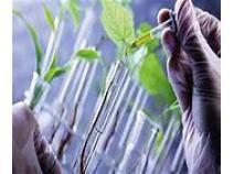 global, Bio-based Polyurethane, market report, history and forecast, 2013-2025.jpg