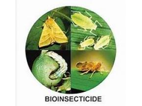 Global Bioinsecticides Market to Witness a Pronounce Growth During 2025 - QY research.jpg