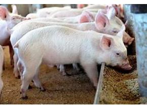 Piglet Feed, market report, history and forecast, global, 2013-2025